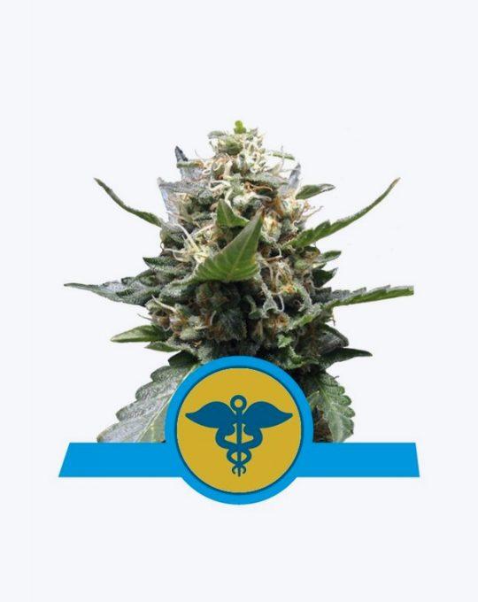 ROYAL-MEDIC-5-ZADEN