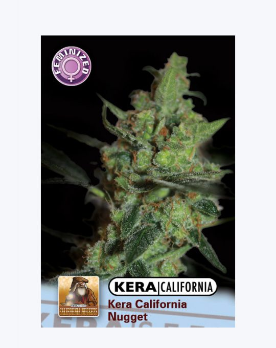 KERA-CALIFORNIA-NUGGETS